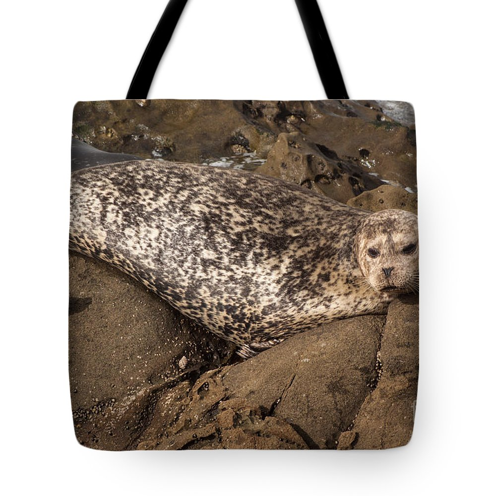 Tote Bag featuring the photograph Sunbathing Sea Lion by Darleen Stry