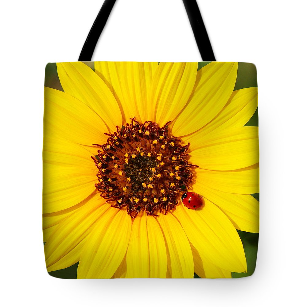Ladybug Tote Bag featuring the photograph Sunflower And Ladybird Beetle 2am-110490 by Andrew McInnes