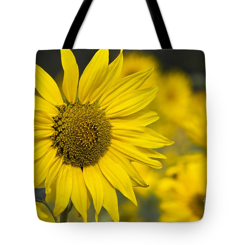 Sunflower Tote Bag featuring the photograph Sunflower Blossom by Heiko Koehrer-Wagner