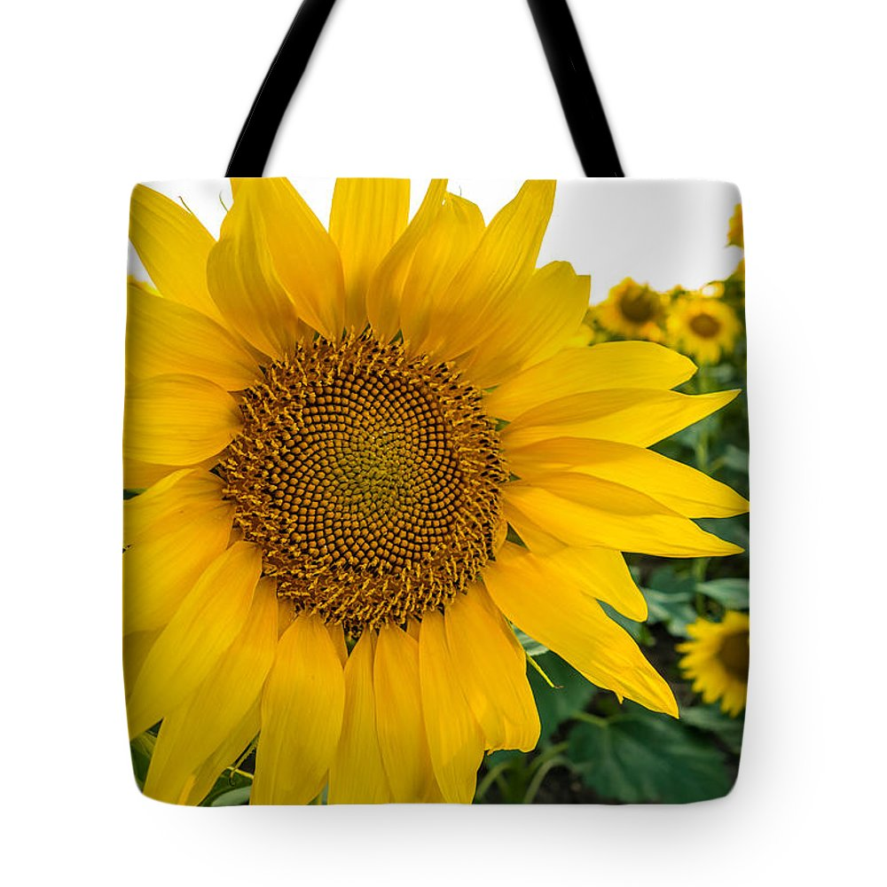 Blooming Tote Bag featuring the photograph Fibonacci In Full Bloom by Melinda Ledsome