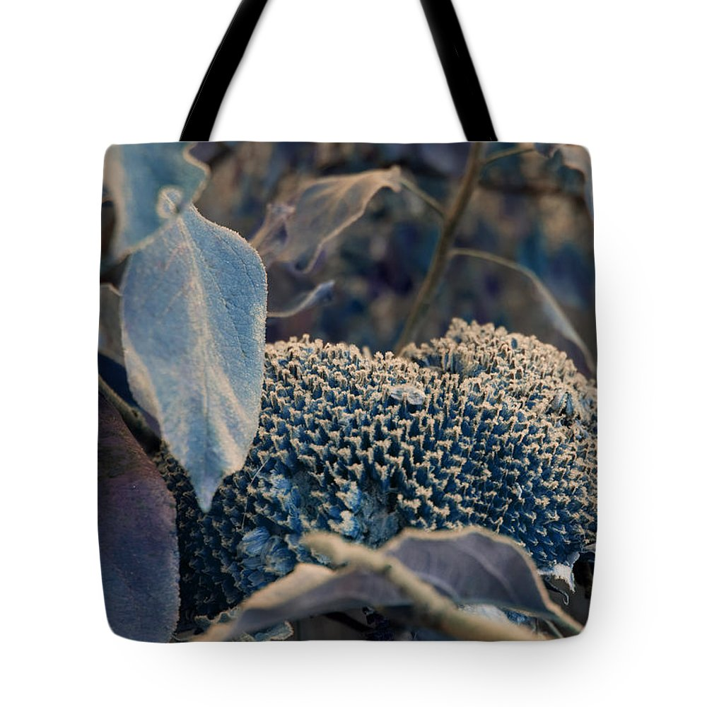 Sunflower Tote Bag featuring the photograph Sunflower Seeds and Apple Leaves by Jo Smoley