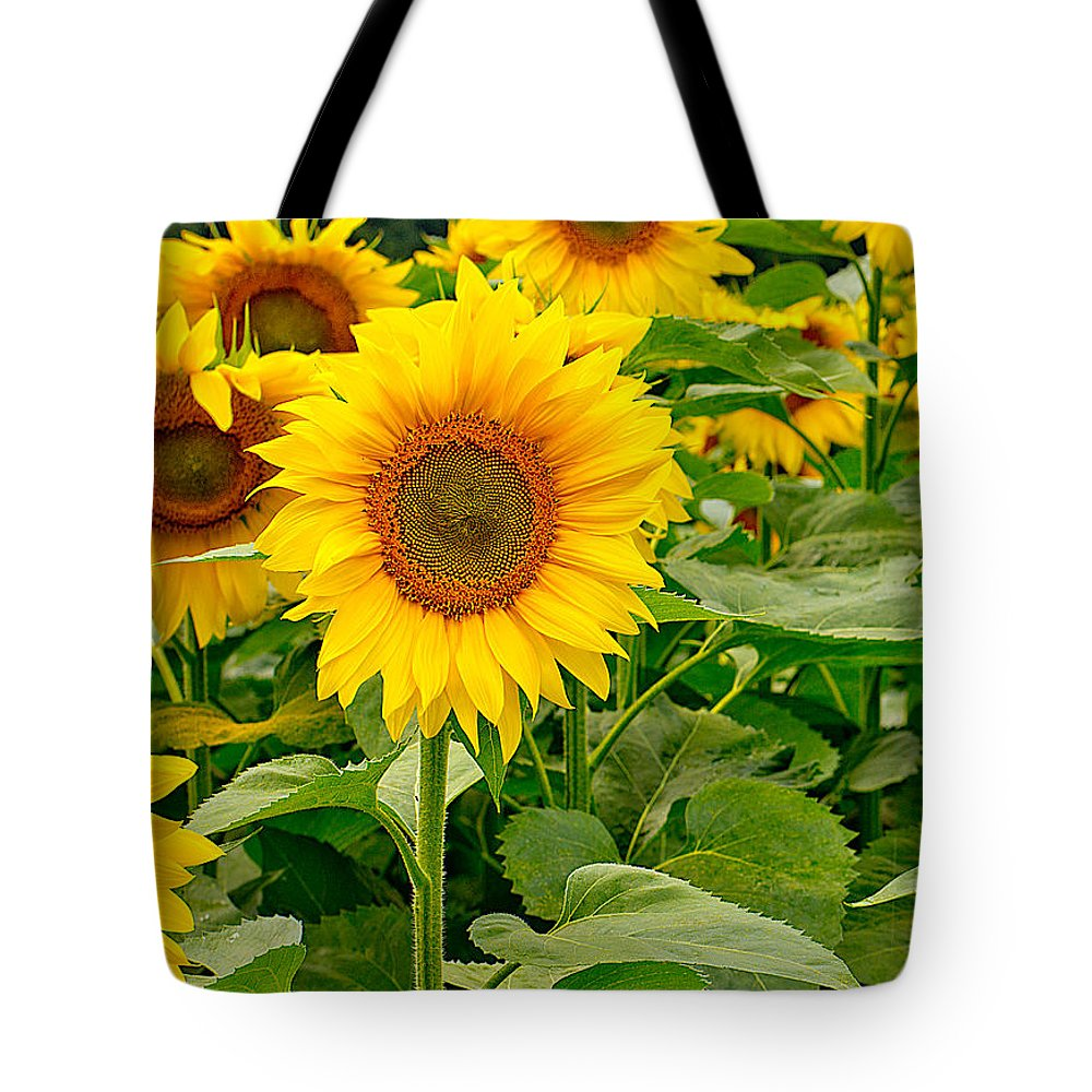 Sunflower Tote Bag featuring the photograph Sunflowers by Brad Marzolf Photography