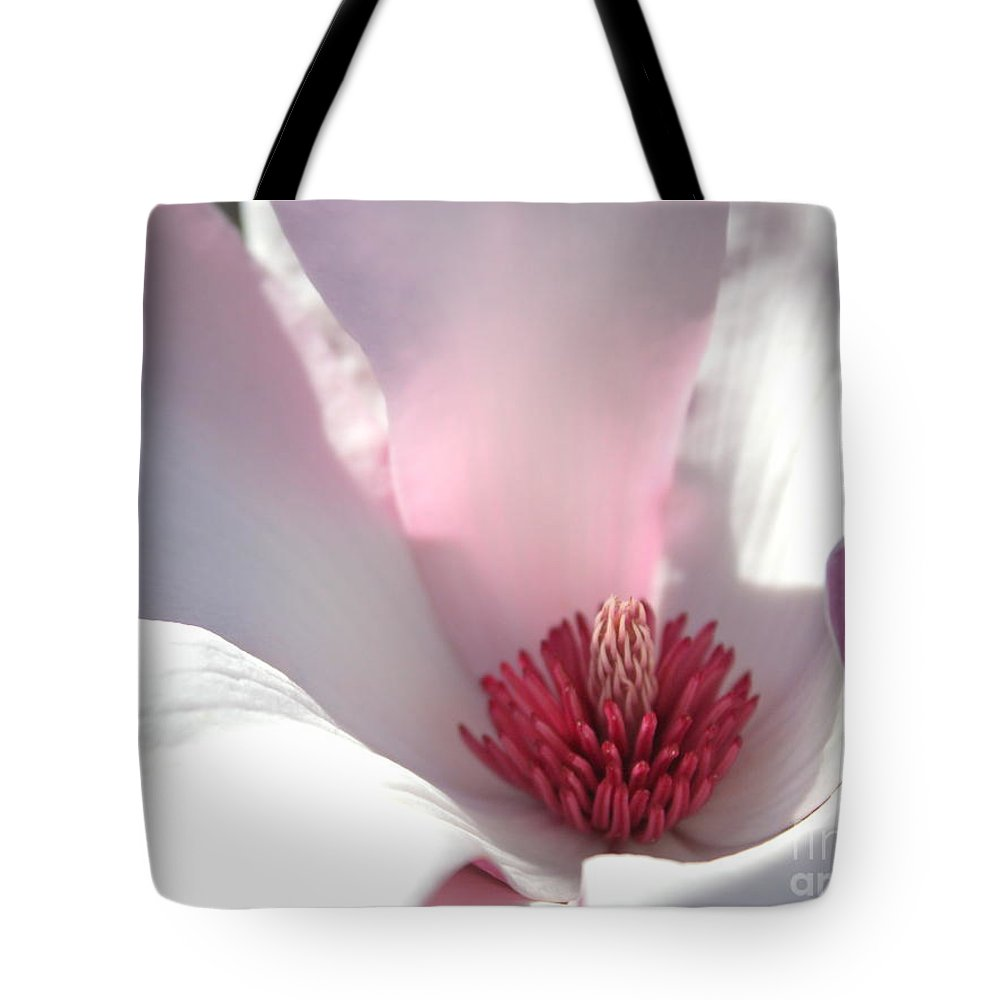 Japanese Magnolia Tote Bag featuring the photograph Sunlight On Magnolia Blossom by Carol Groenen