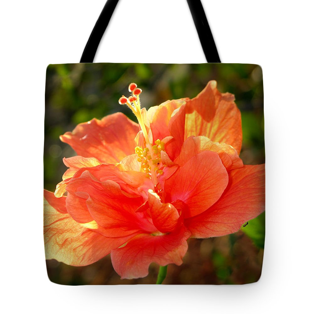 Sunlight Tote Bag featuring the photograph Sunlit Hibiscus by Francesa Miller