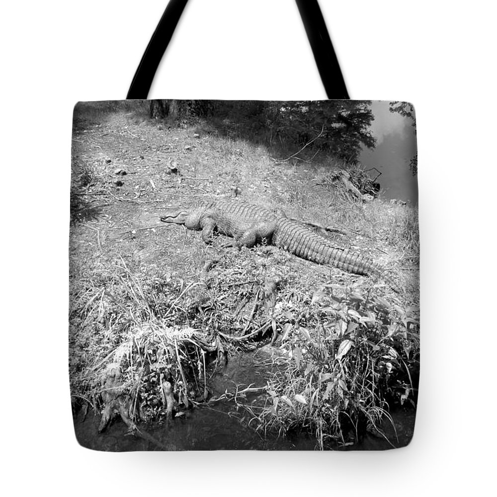 Artistic Tote Bag featuring the photograph Sunny Gator Black And White by Joseph Baril
