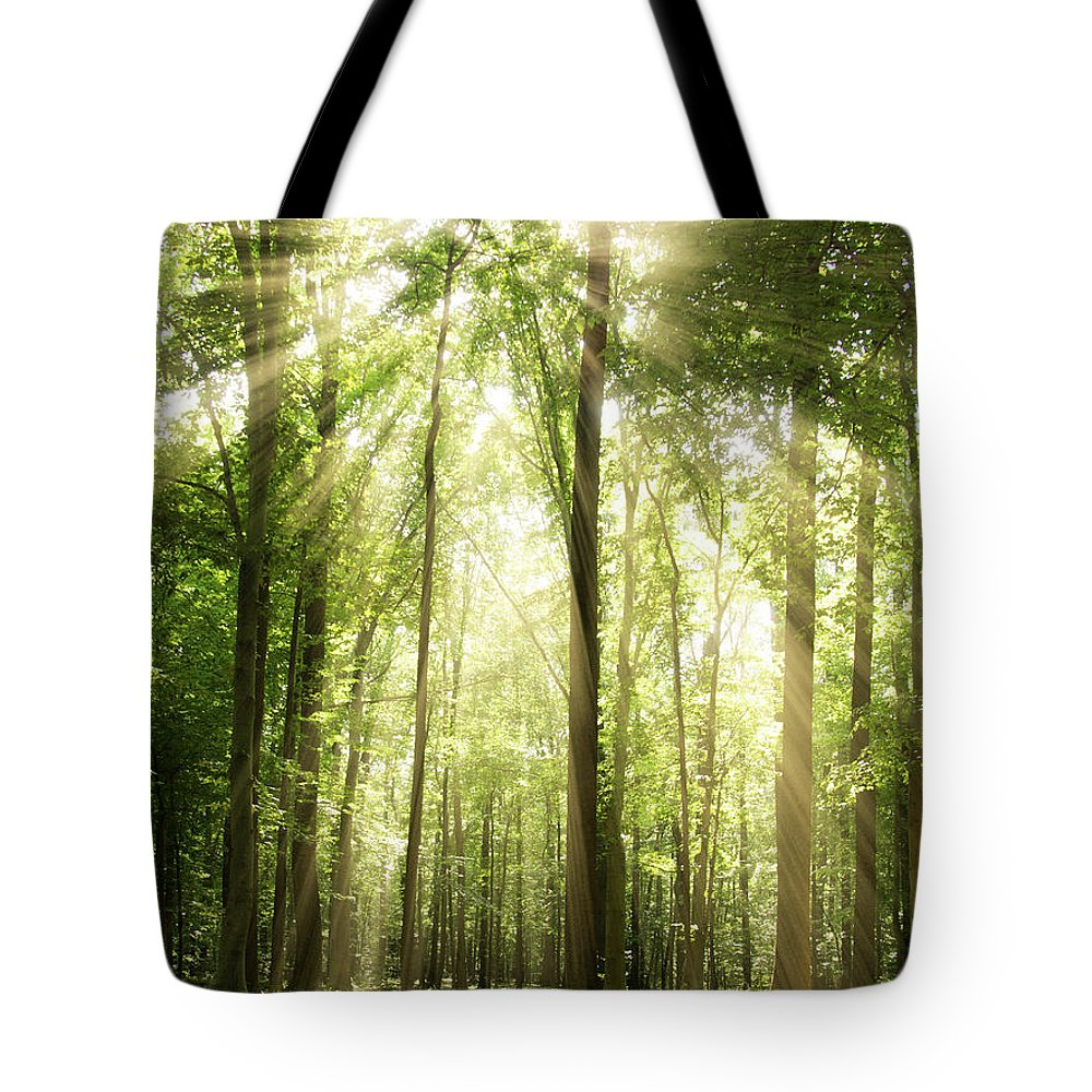 Tranquility Tote Bag featuring the photograph Sunrays Through Treetops by Melissa Fague