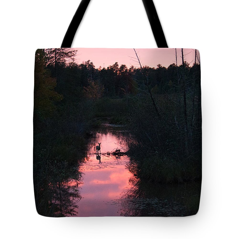 Deer Tote Bag featuring the photograph Sunset Deer by Linda Kerkau