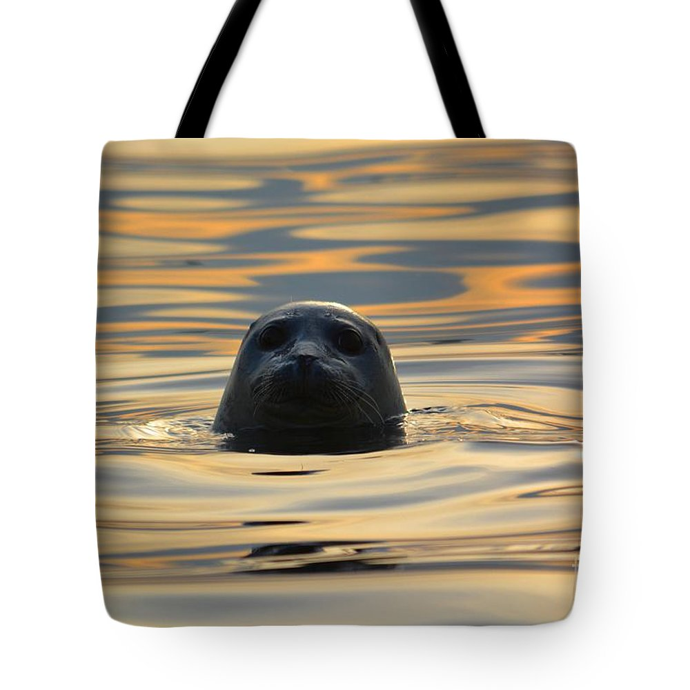 Seal Tote Bag featuring the photograph Sunset Seal by Deanna Cagle