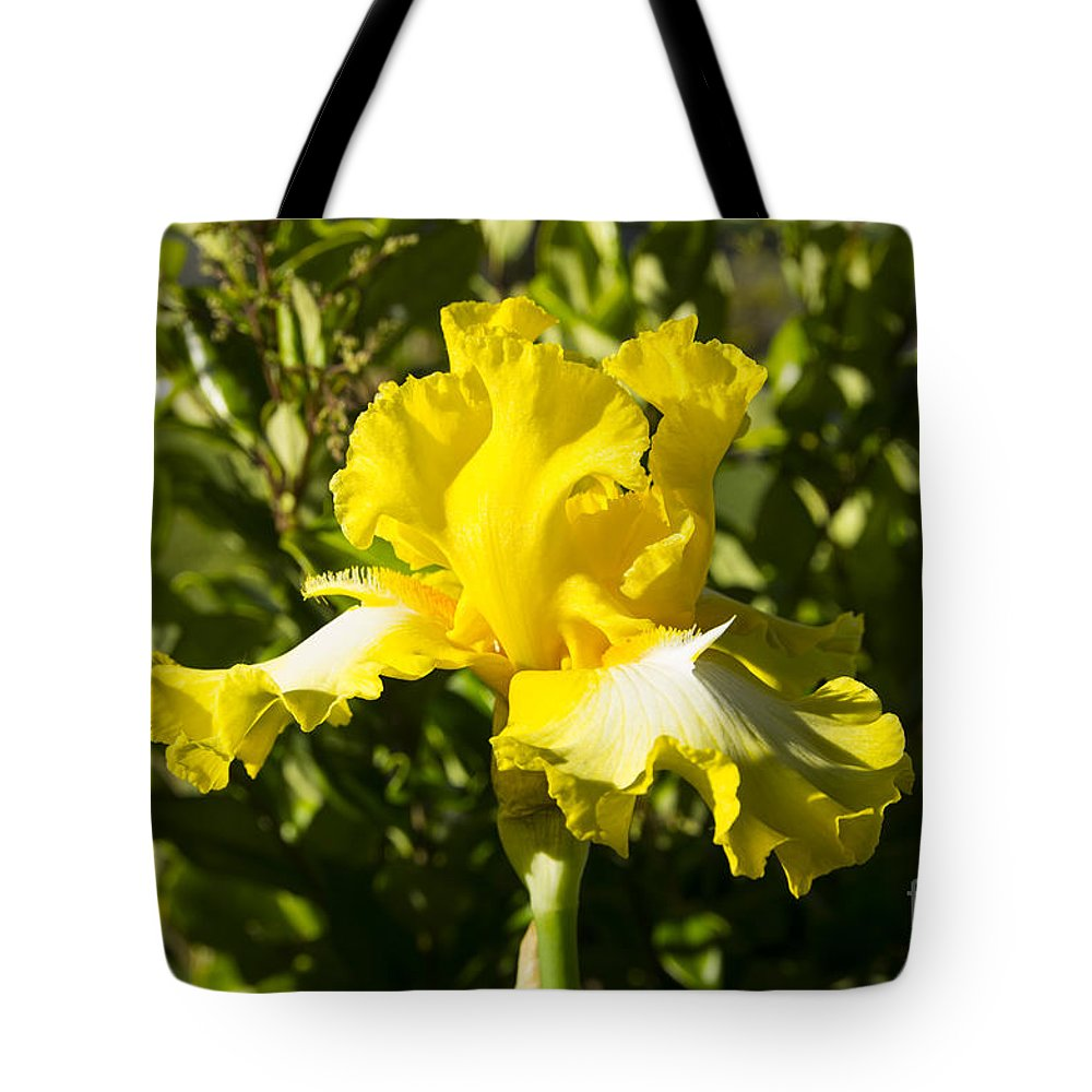 Yellow Tote Bag featuring the photograph Sunshine Iris by Louise Magno