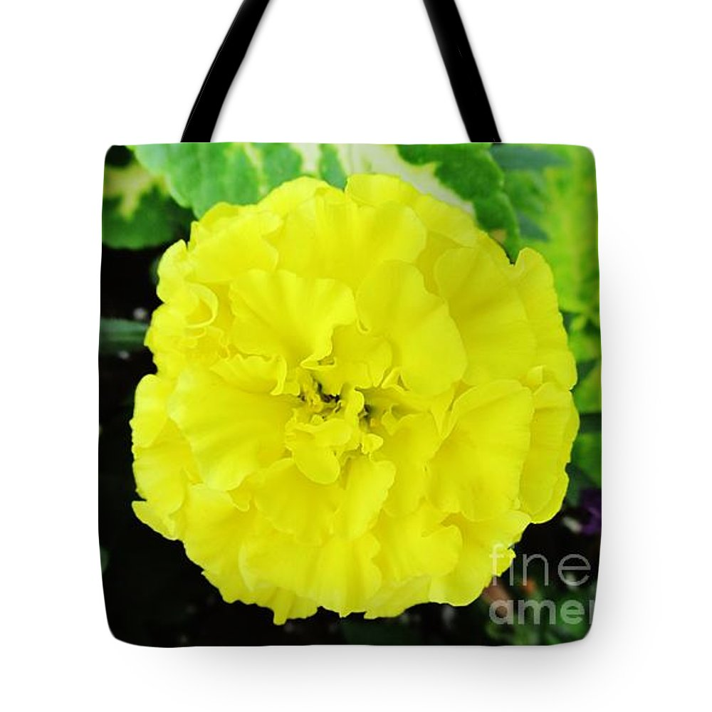 Carnation Tote Bag featuring the photograph Sunshine Joy And Hope by Don Baker