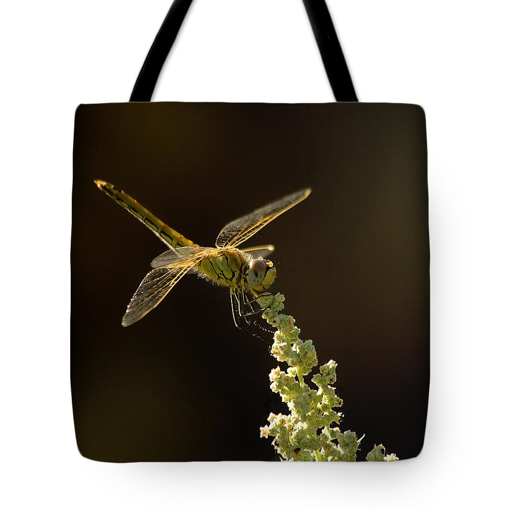 Dragonfly Tote Bag featuring the photograph Sunshine On A Landed Dragonfly. by Leyla Ismet