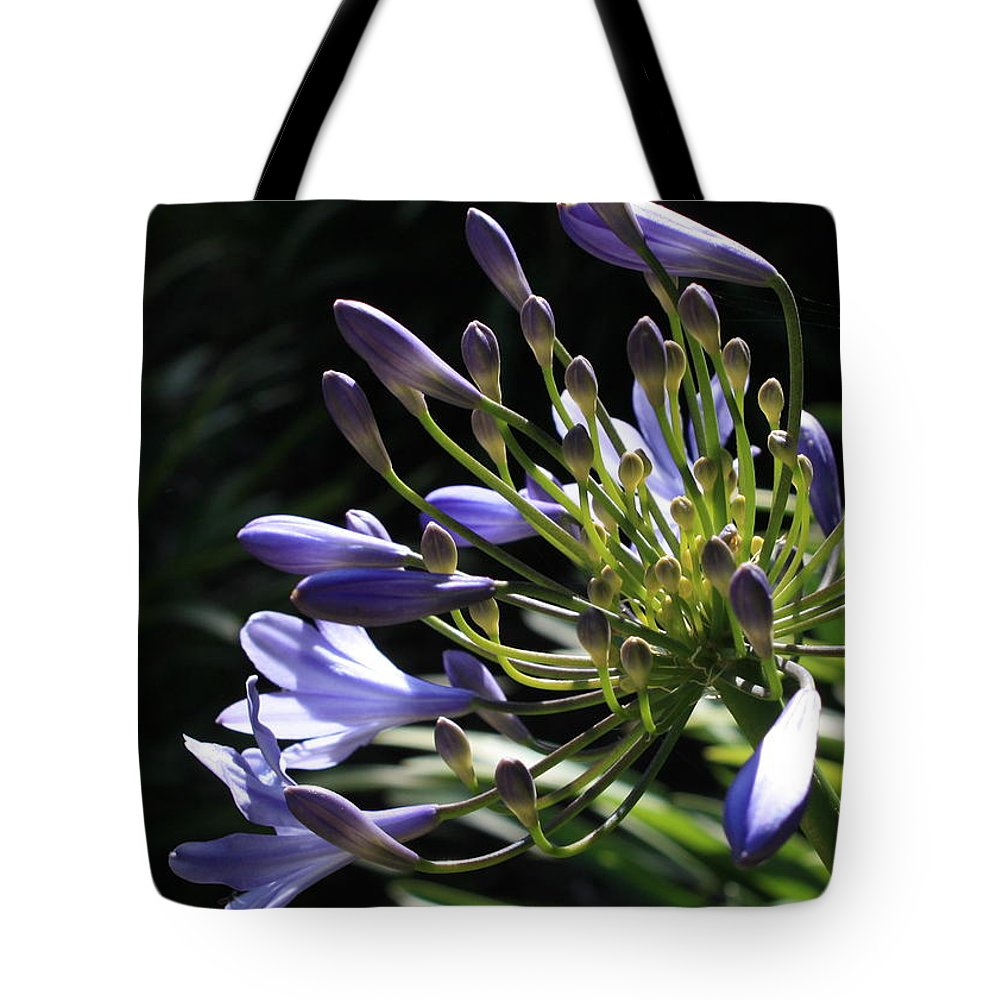 African Lily Tote Bag featuring the photograph Sunshine On Agapanthus by Carol Groenen