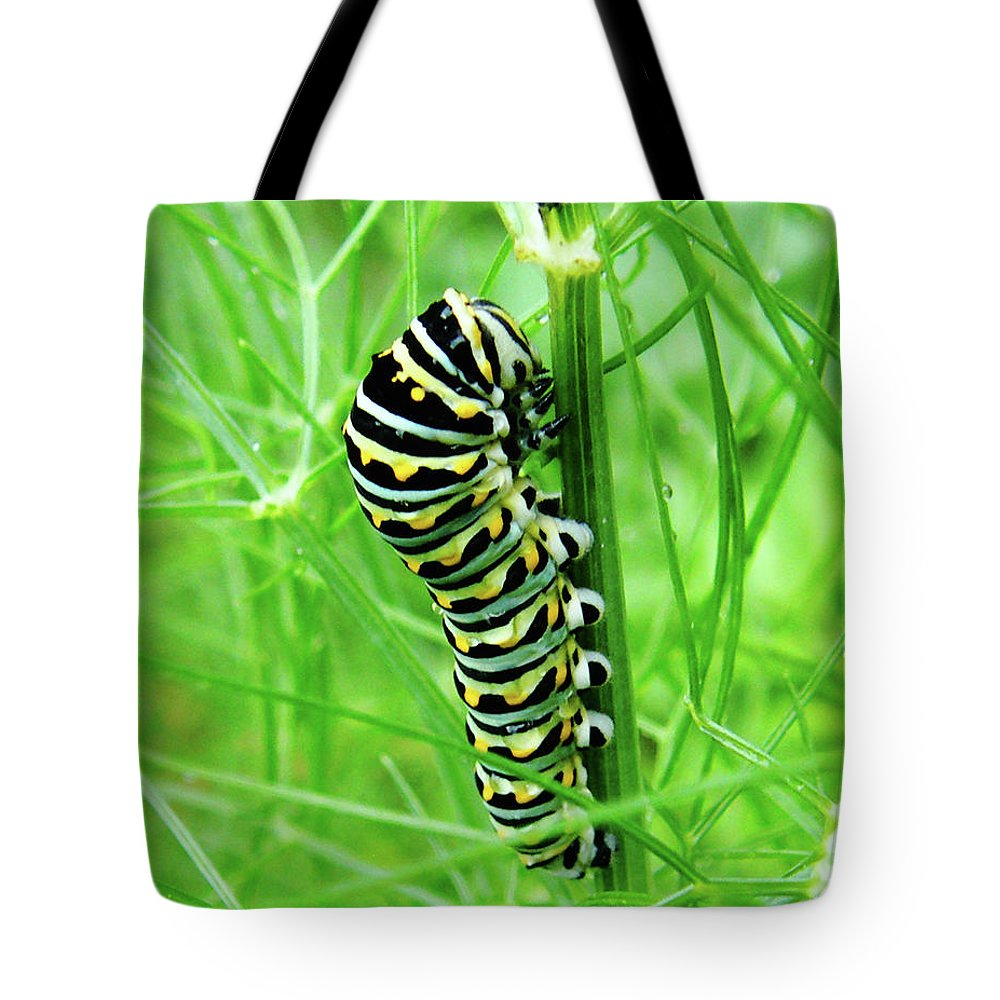Caterpillar Tote Bag featuring the photograph Swallowtail To Be by Lizi Beard-Ward