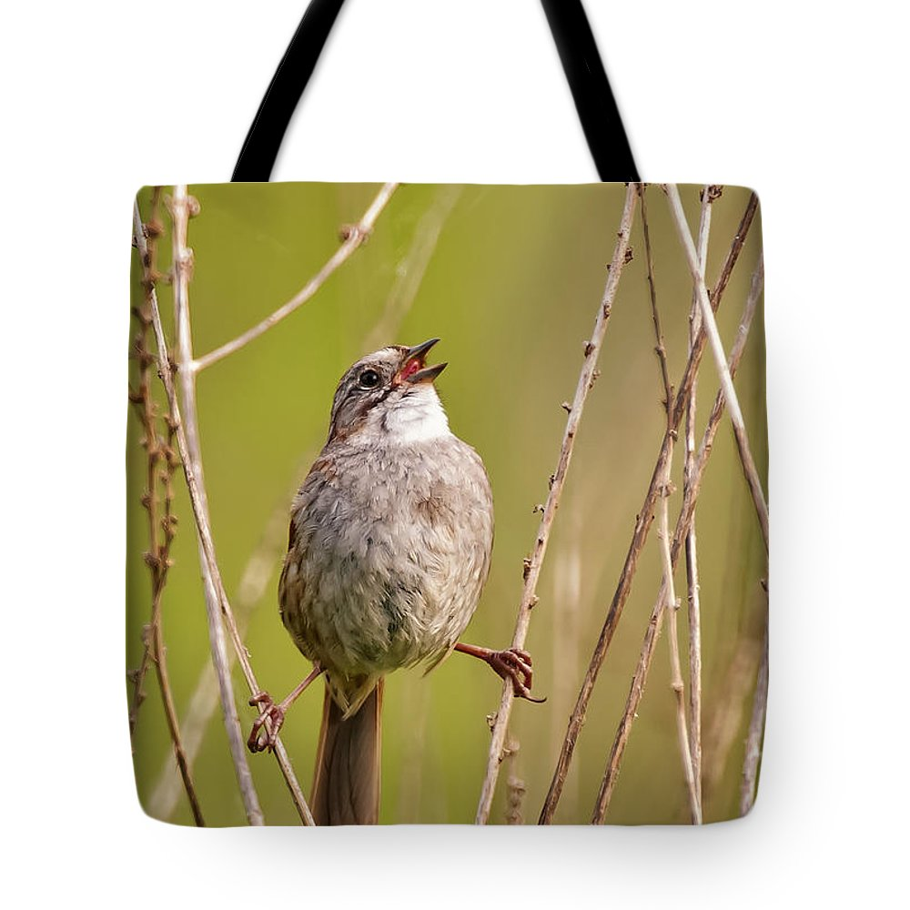 Swamp Sparrow Tote Bag featuring the photograph Swamp Sparrow Split Decision by Timothy Flanigan