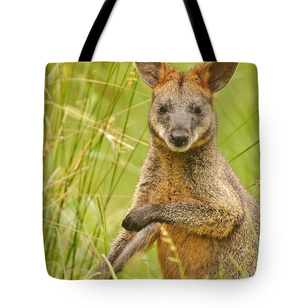 Swamp Wallaby Tote Bag featuring the photograph Swamp Wallaby by Michael Nau