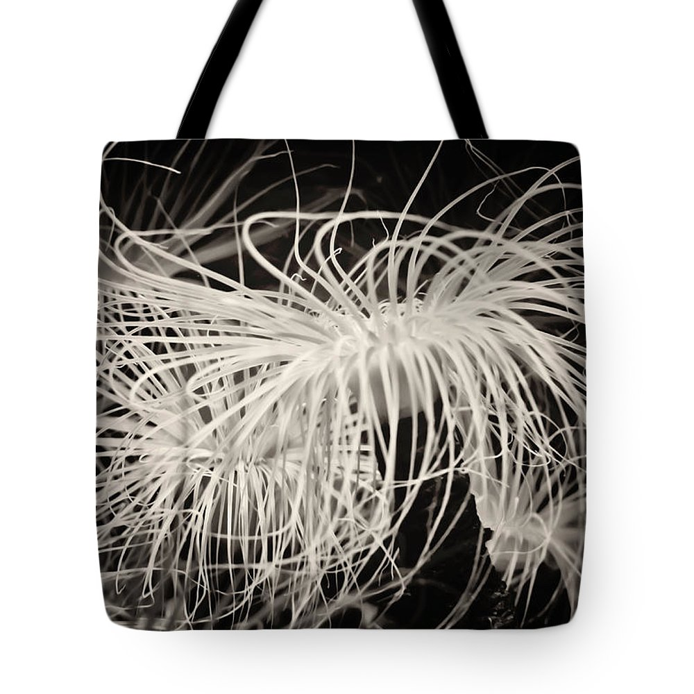 Sea Anemone Tote Bag featuring the photograph Swaying Anemone Bw by Heather Applegate
