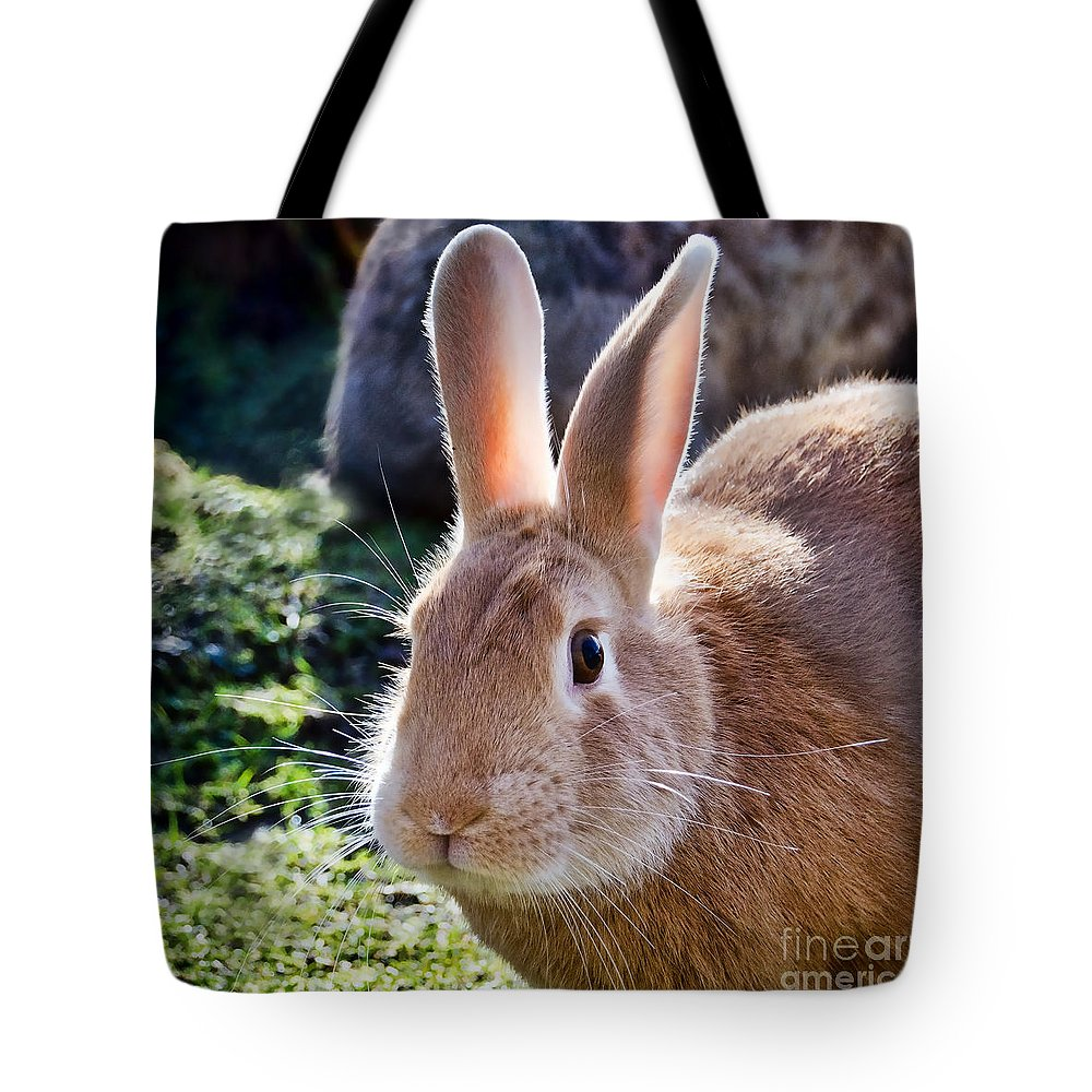 Bunny Tote Bag featuring the photograph Sweet Little Bunny by Susie Peek