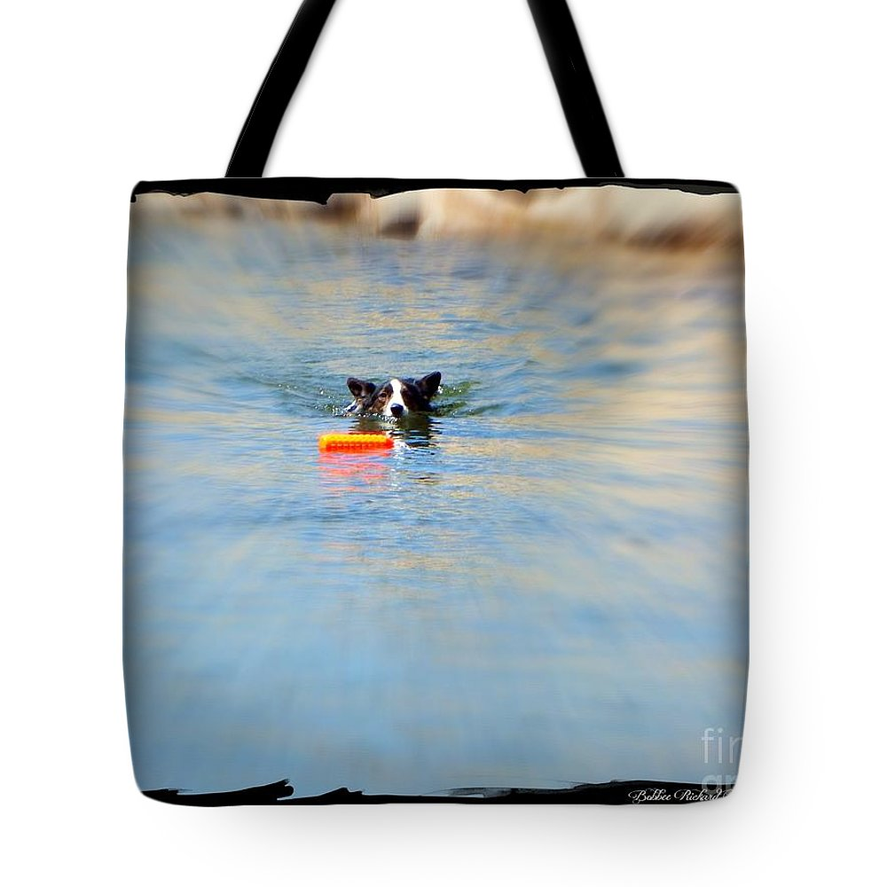 Border Collie Tote Bag featuring the photograph Swimmer In The Truckee River by Bobbee Rickard