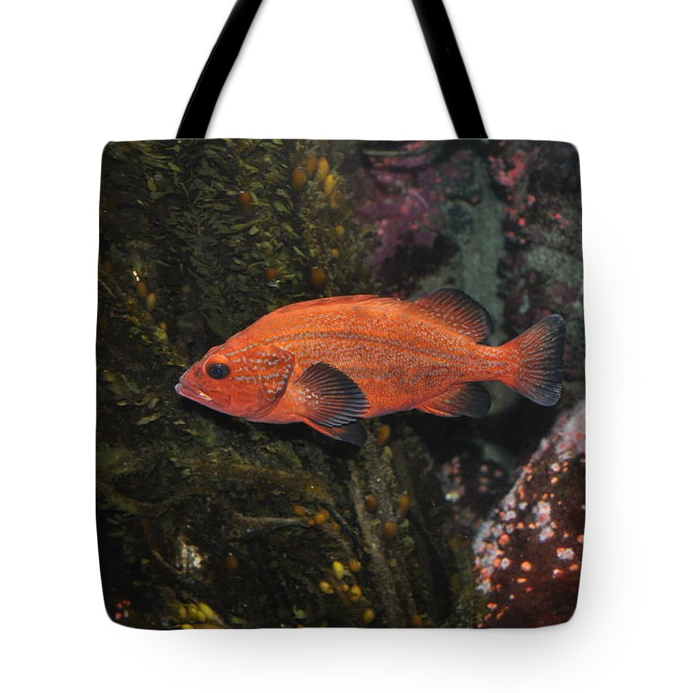 Newport Tote Bag featuring the photograph Swimming by Image Takers Photography LLC - Laura Morgan
