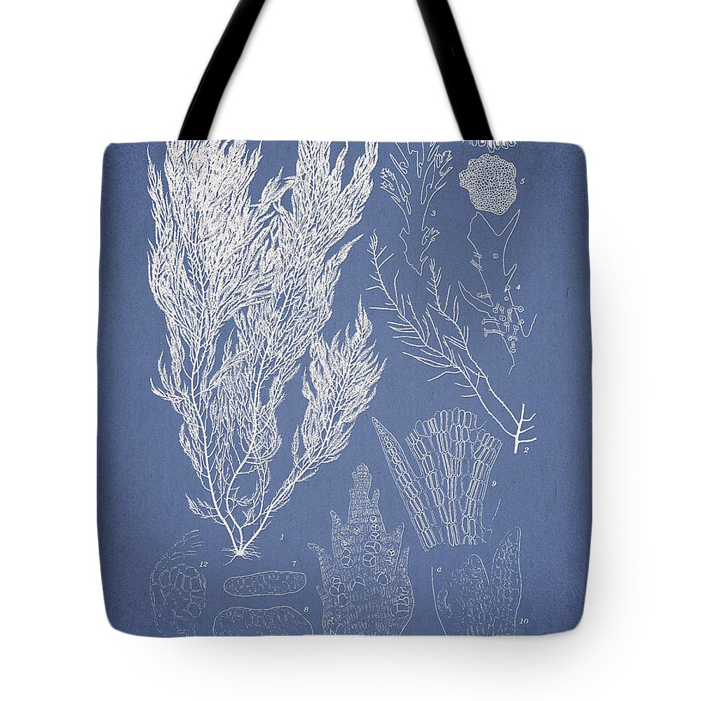 Algae Tote Bag featuring the digital art Symphocladia linearis by Aged Pixel