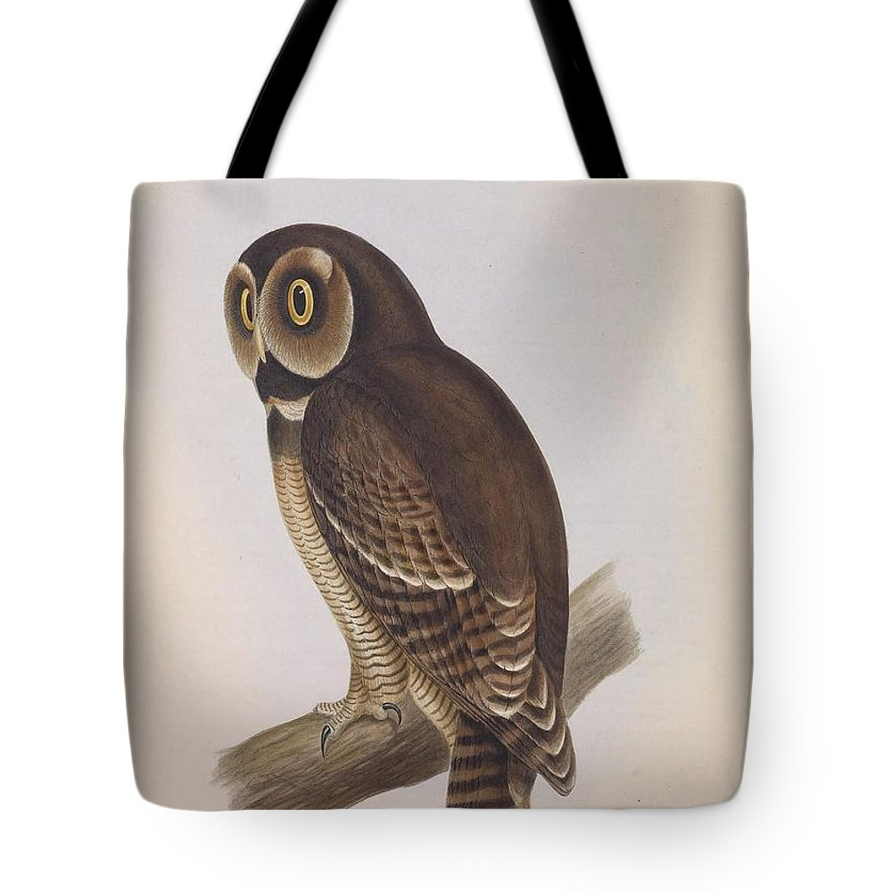 Audubon Tote Bag featuring the painting Syrnium Owl by Philip Ralley