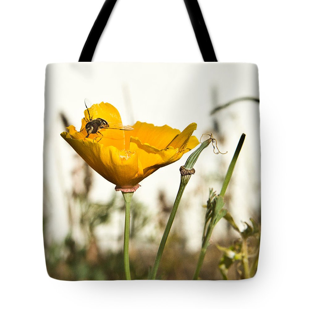 Syrphid Tote Bag featuring the photograph Syrphid Fly And Poppy 2 by Douglas Barnett