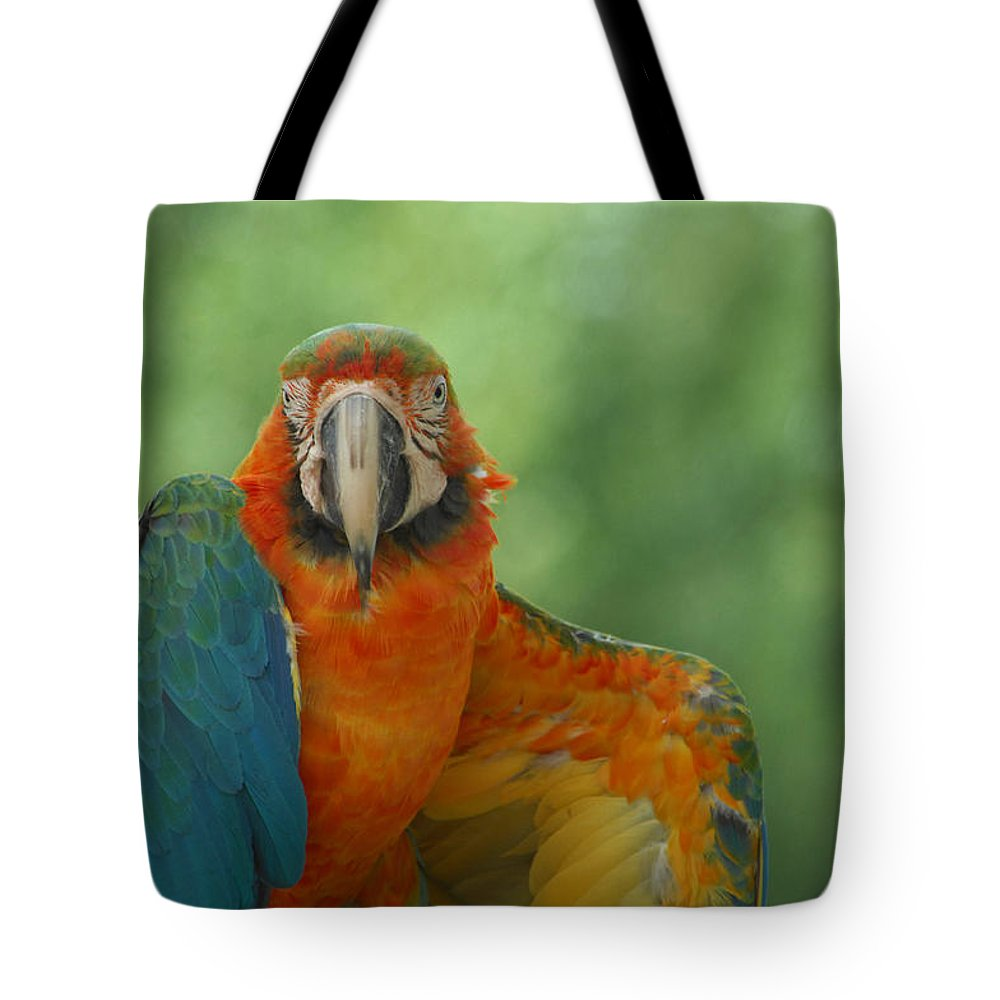 Parrot Tote Bag featuring the photograph Ta Da by Donna Blackhall