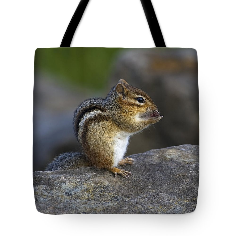 Festblues Tote Bag featuring the photograph Tai Chi Munk.. by Nina Stavlund