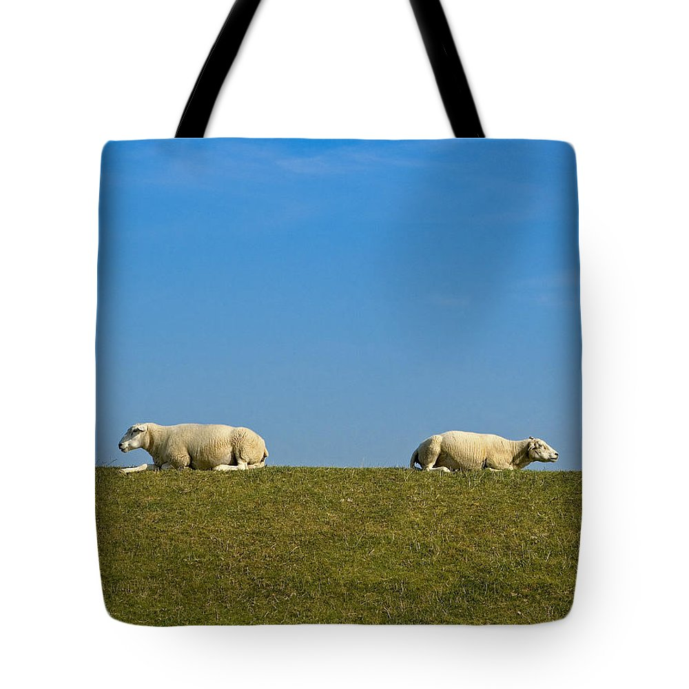Sheep Tote Bag featuring the photograph Taking A Break by Peter Lloyd
