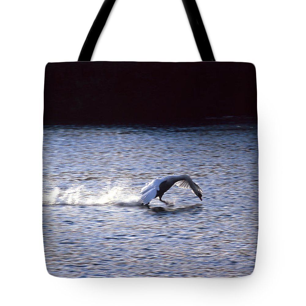 Adda Tote Bag featuring the photograph Taking Off Swan by Riccardo Mottola