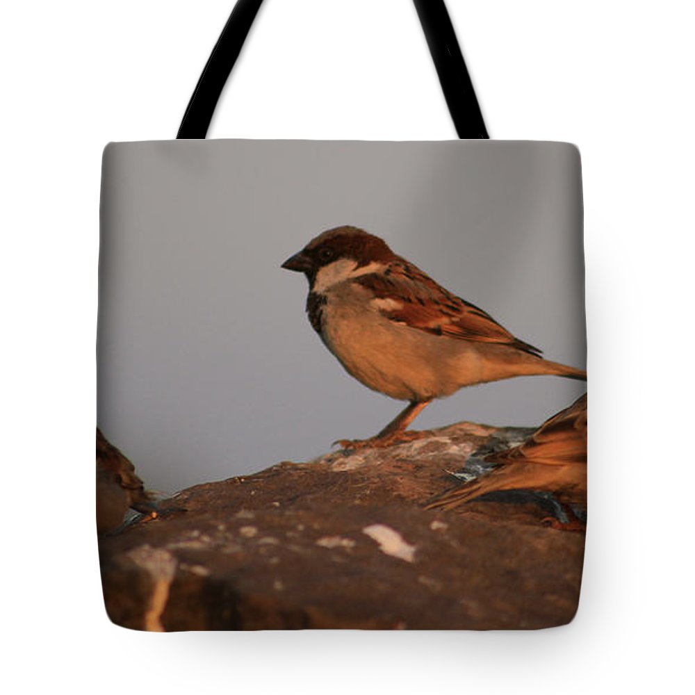 Birds Tote Bag featuring the photograph Talk With Anyone Else by Four Hands Art