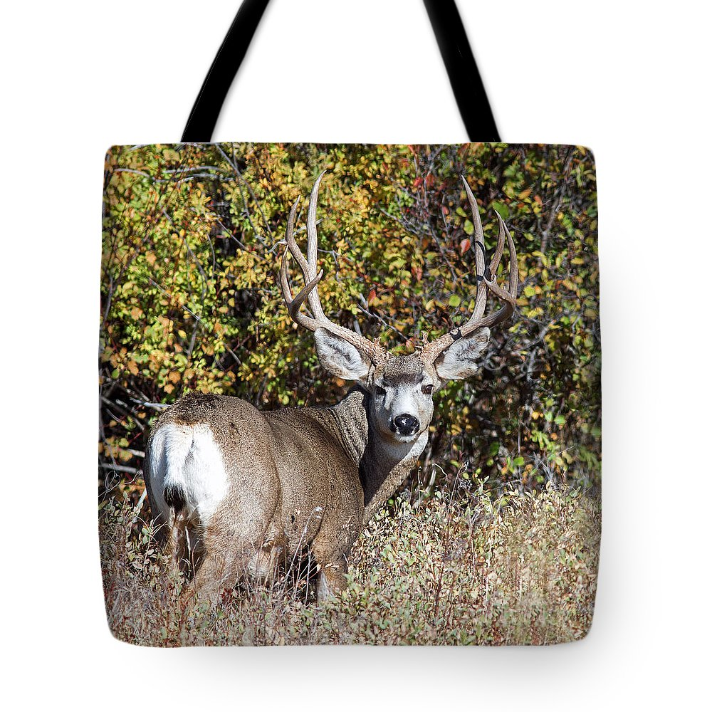 Mule Deer Tote Bag featuring the photograph Tall And Handsome by Jack Bell
