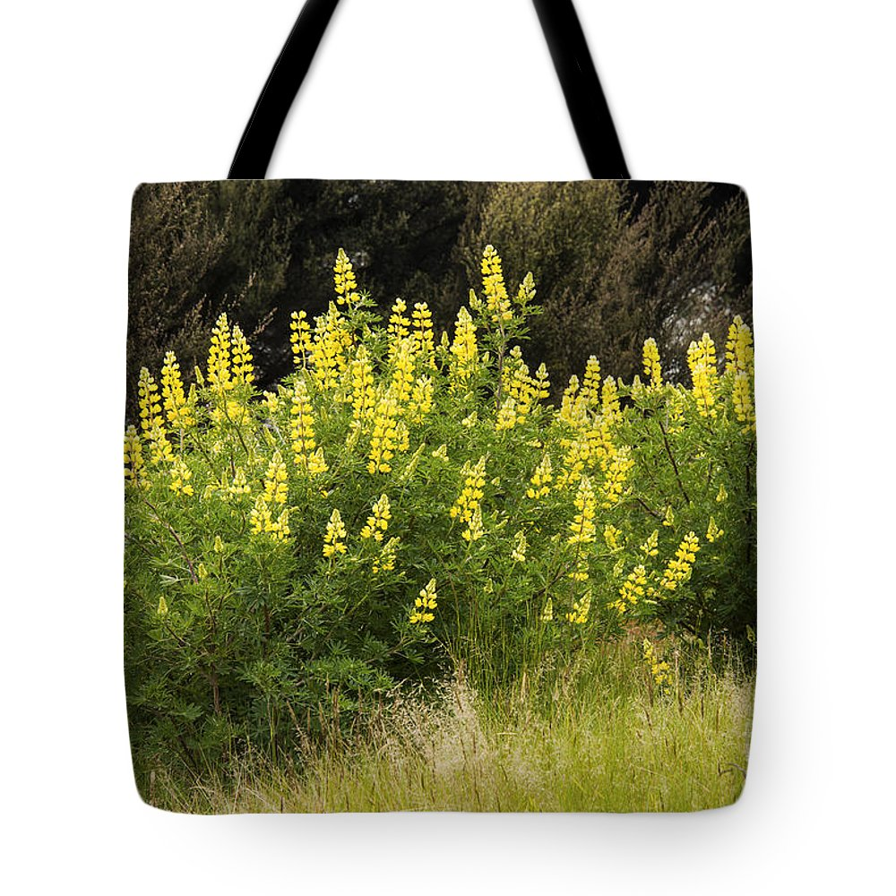 Lake Te Anau New Zealand Yellow Lupin Lupins Flower Flowers Plant Plants Bloom Blooms Tote Bag featuring the photograph Tall Yellow Lupin by Bob Phillips