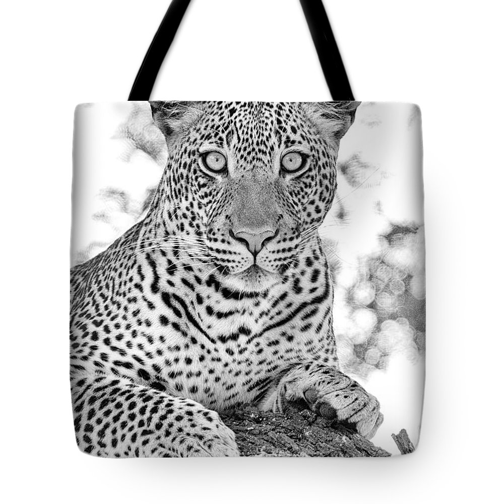 Leopard Tote Bag featuring the photograph Tarangire Leopard by Max Waugh