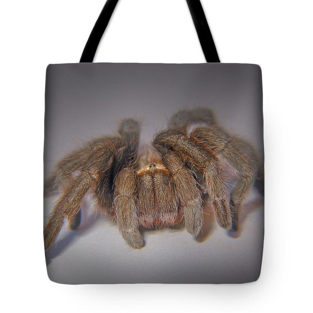 Aphonopelma Tote Bag featuring the photograph Tarantula by David and Carol Kelly