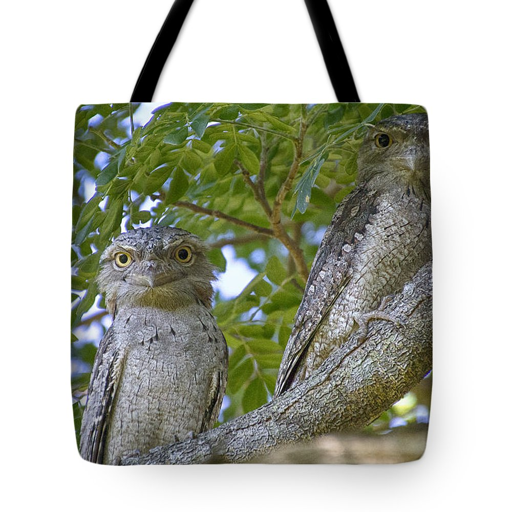 Tawny Frogmouths Tote Bag featuring the photograph Tawny Frogmouths by Douglas Barnard