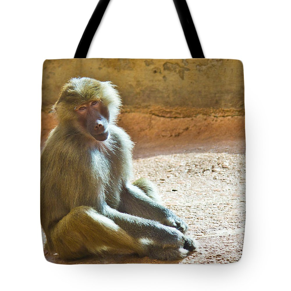 Baboon Tote Bag featuring the photograph Teen Baboon by Jonny D