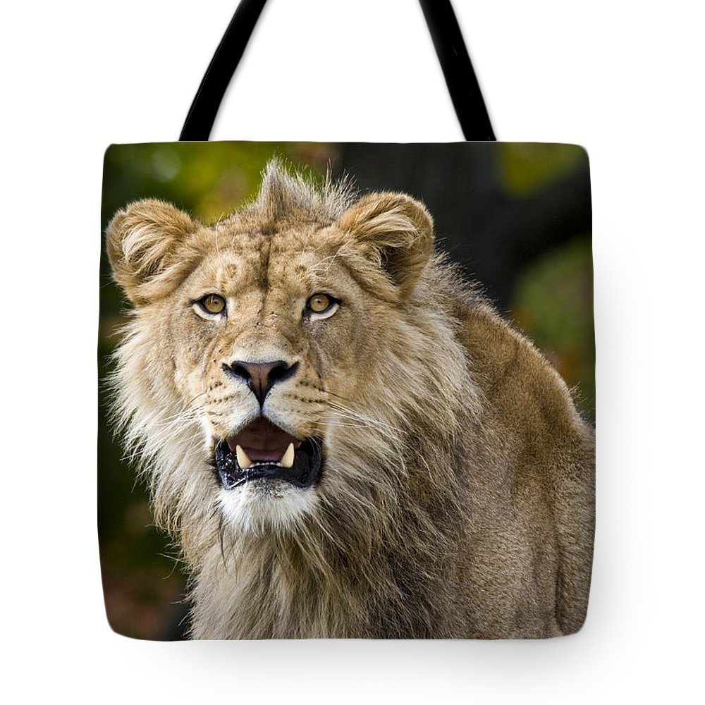 Teenage King Of The Beast Tote Bag featuring the photograph Teenage King Of The Beast by Wes and Dotty Weber