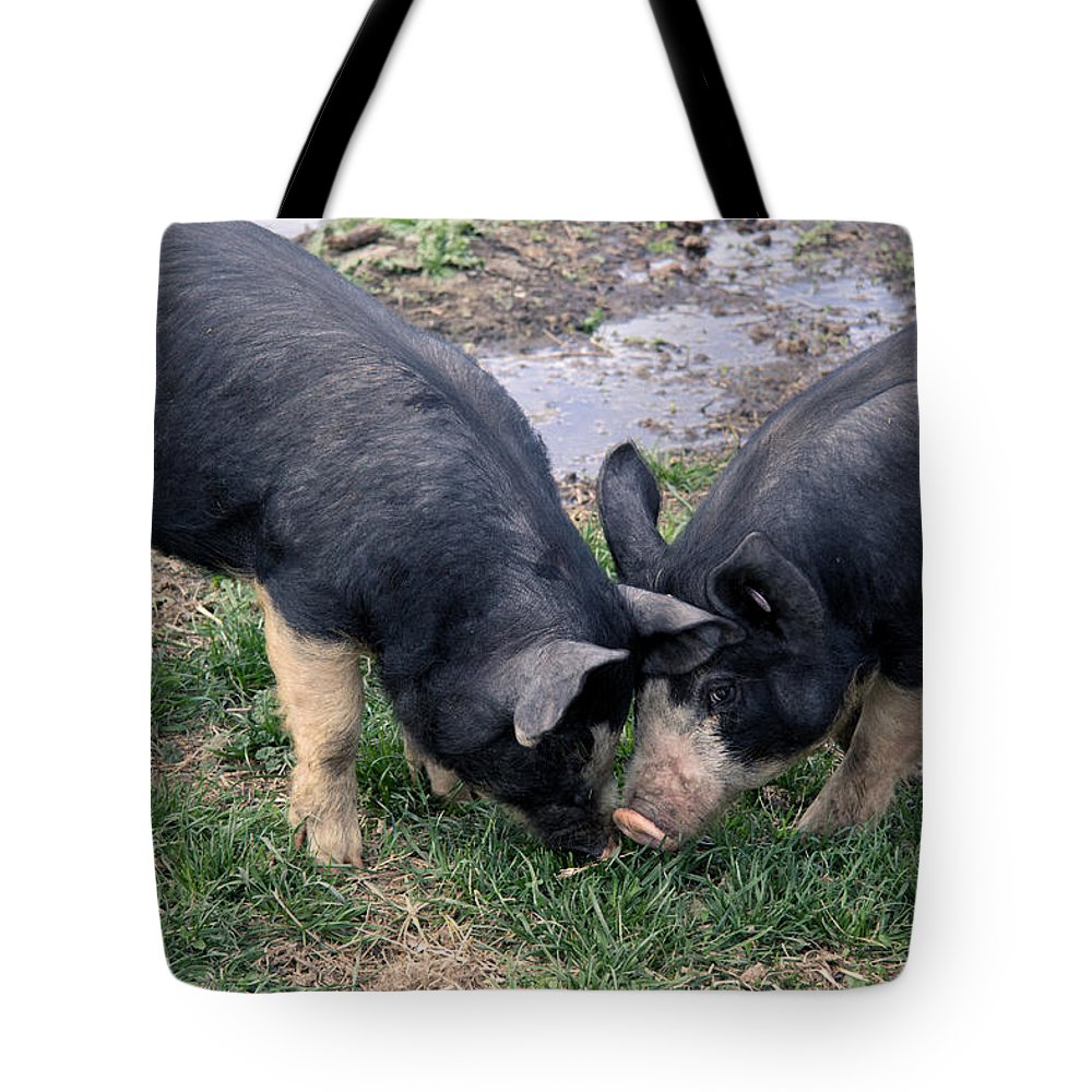 Animal Tote Bag featuring the photograph Tender by Kathy Bassett