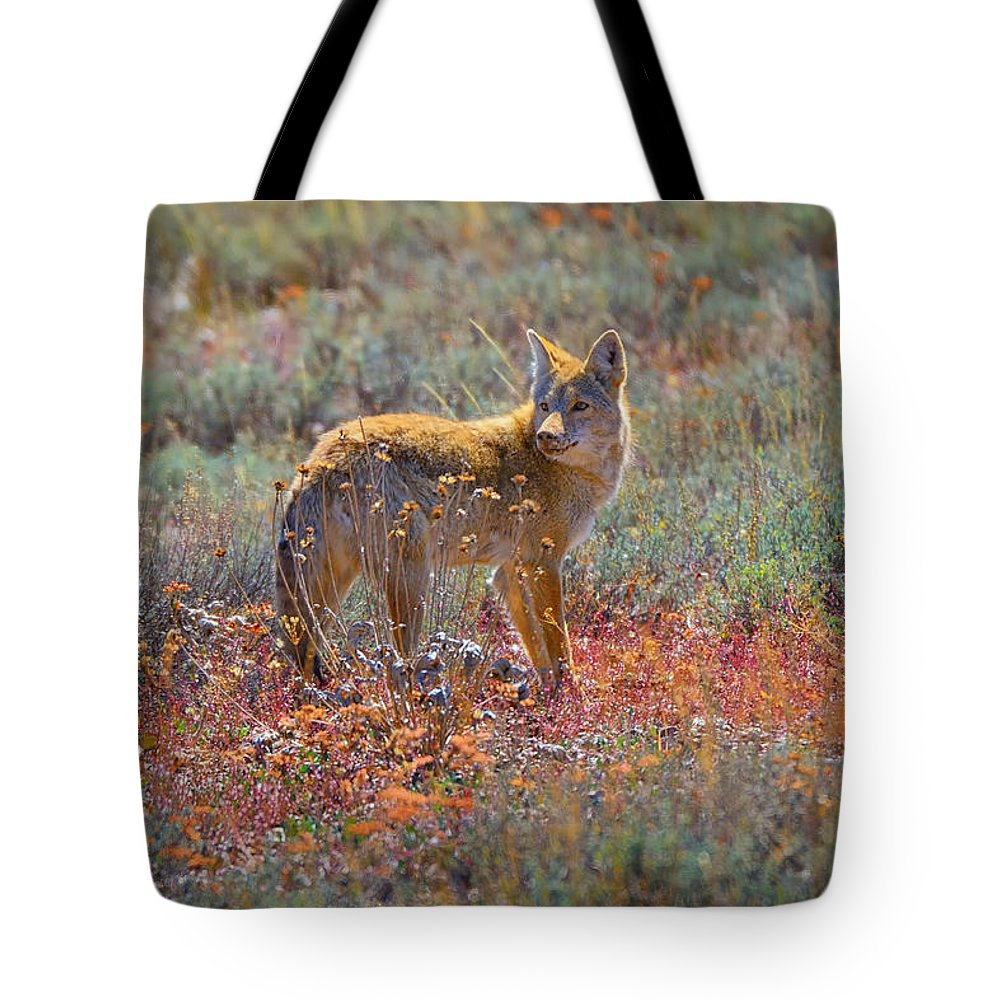 Coyote Tote Bag featuring the photograph Teton Coyote by Greg Norrell