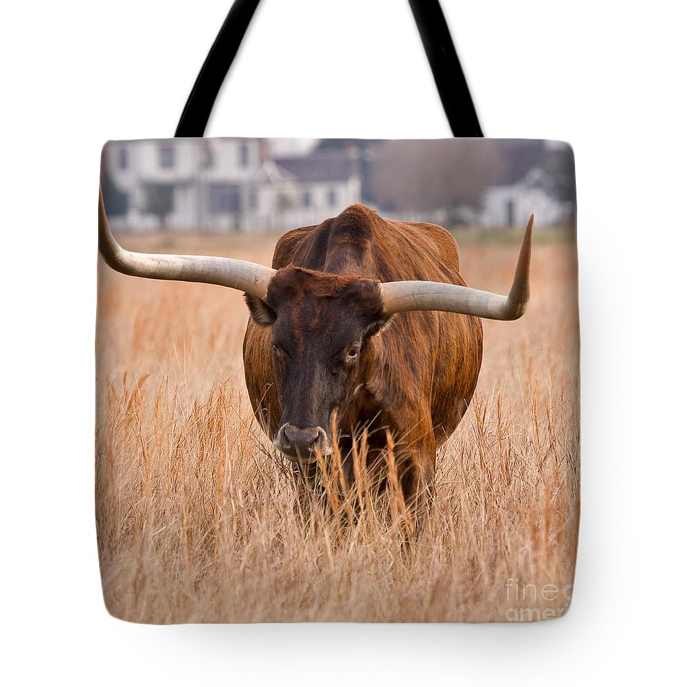 Animal Tote Bag featuring the photograph Texas Longhorn by Louise Heusinkveld
