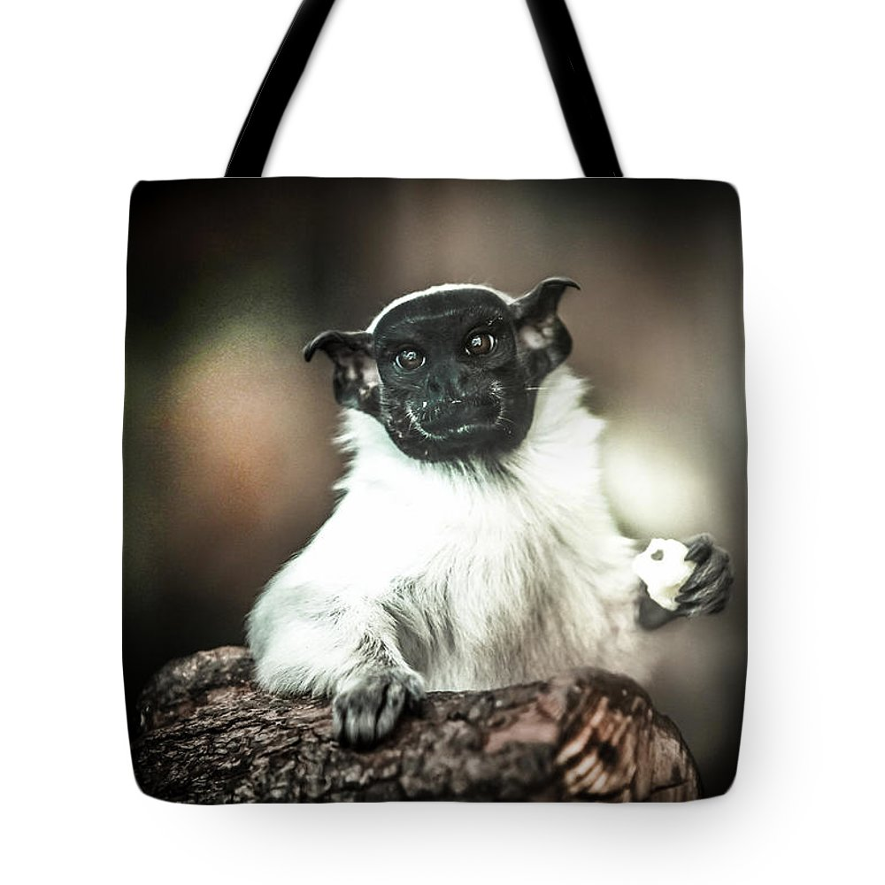 Animals Tote Bag featuring the photograph The Anxious Ape by Stwayne Keubrick