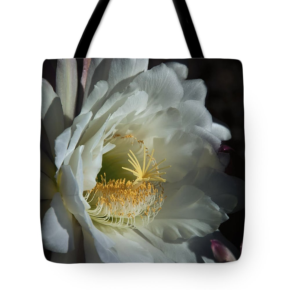 Torch Cactus Tote Bag featuring the photograph The Argentine Giant by Saija Lehtonen