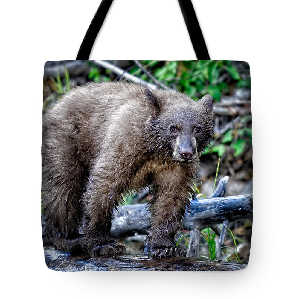 Wildlife Tote Bag featuring the photograph The Balance Beam by Jim Thompson