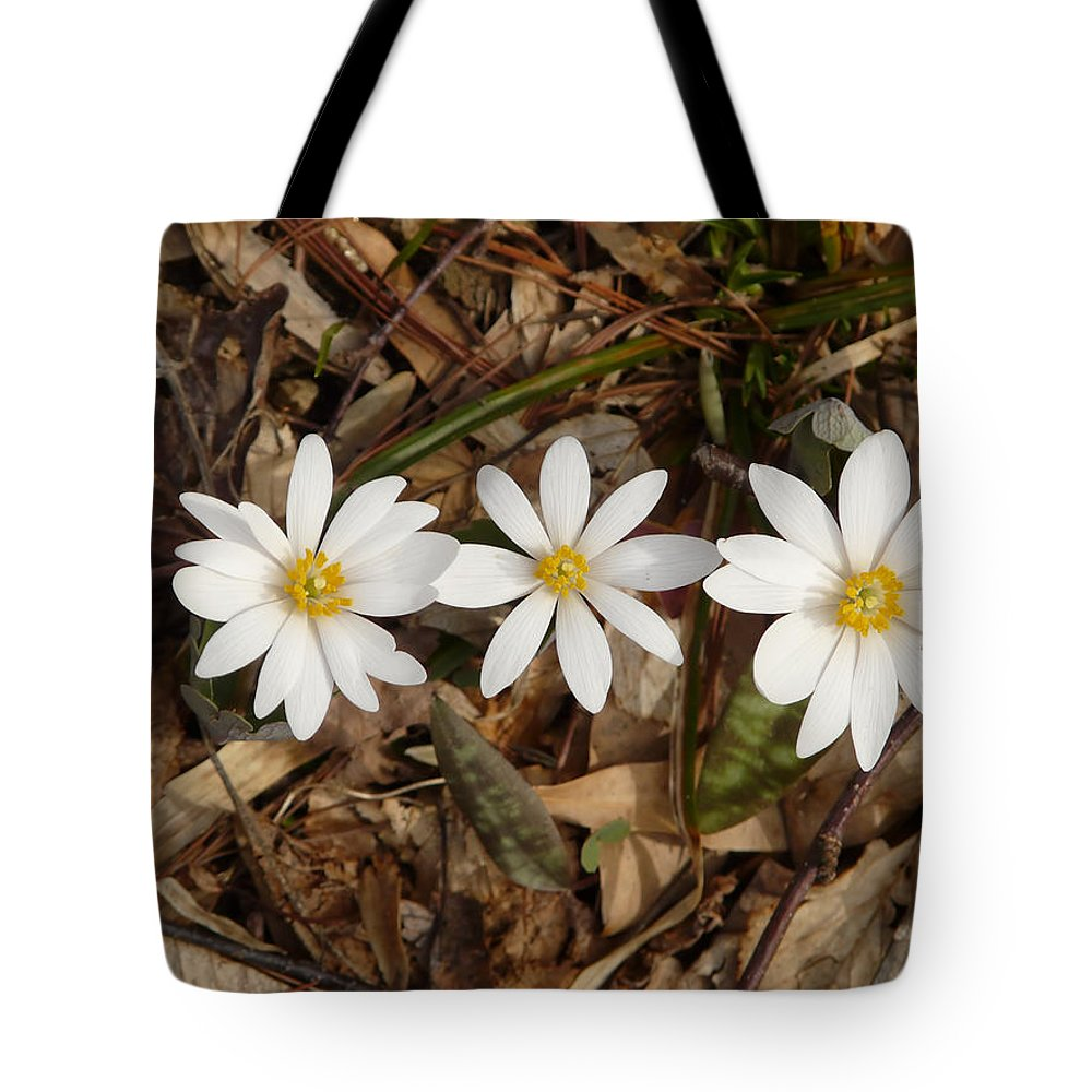 Bloodroot Tote Bag featuring the photograph The Bloodroot Trio by Bill Shuman
