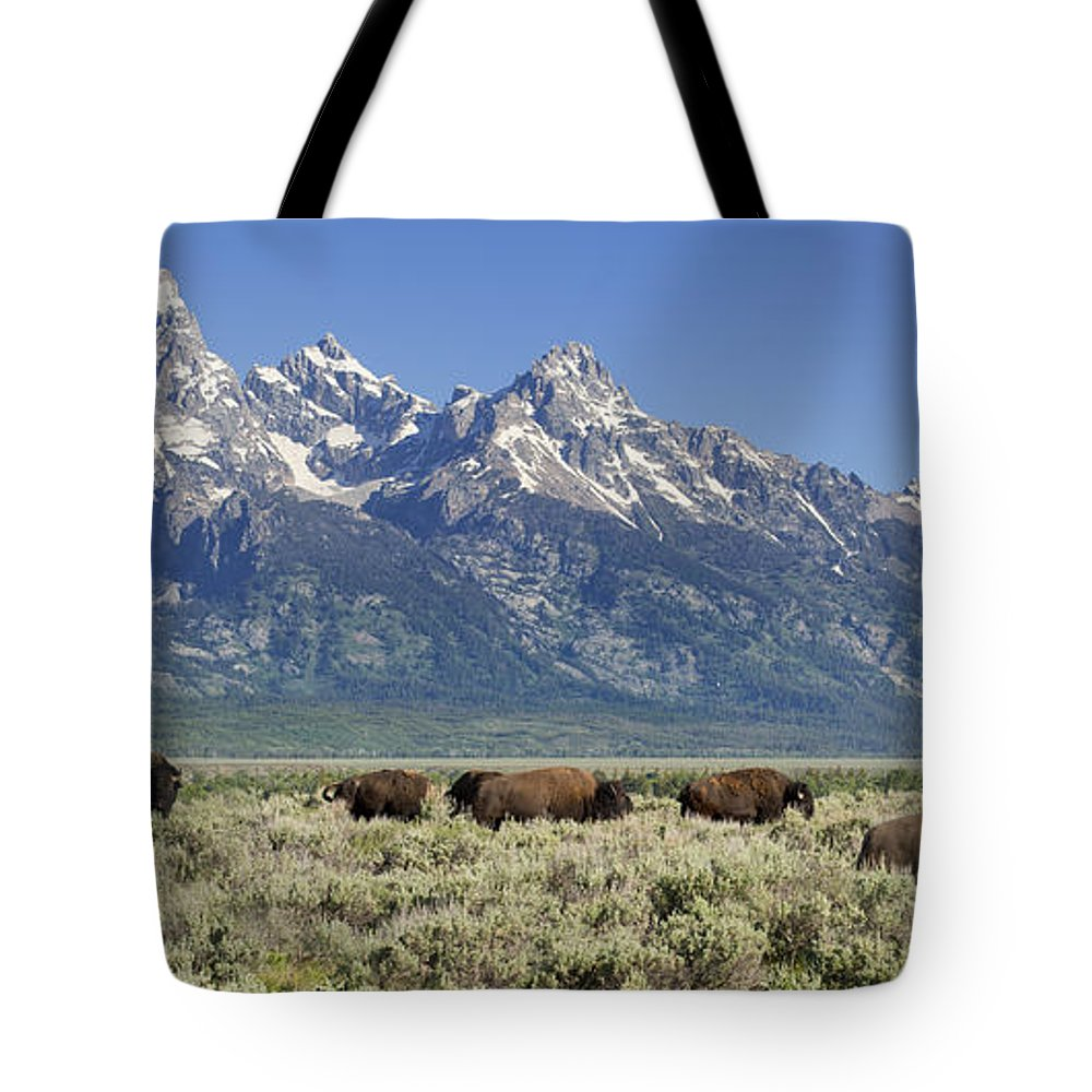 Bison Tote Bag featuring the photograph The Boys Club Of Grand Teton by Sandra Bronstein
