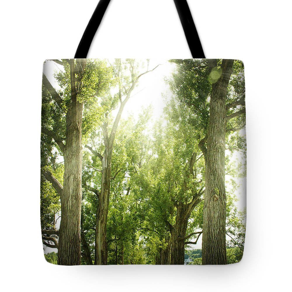 Nature Tote Bag featuring the photograph The Bright Path by Elisabete Companion