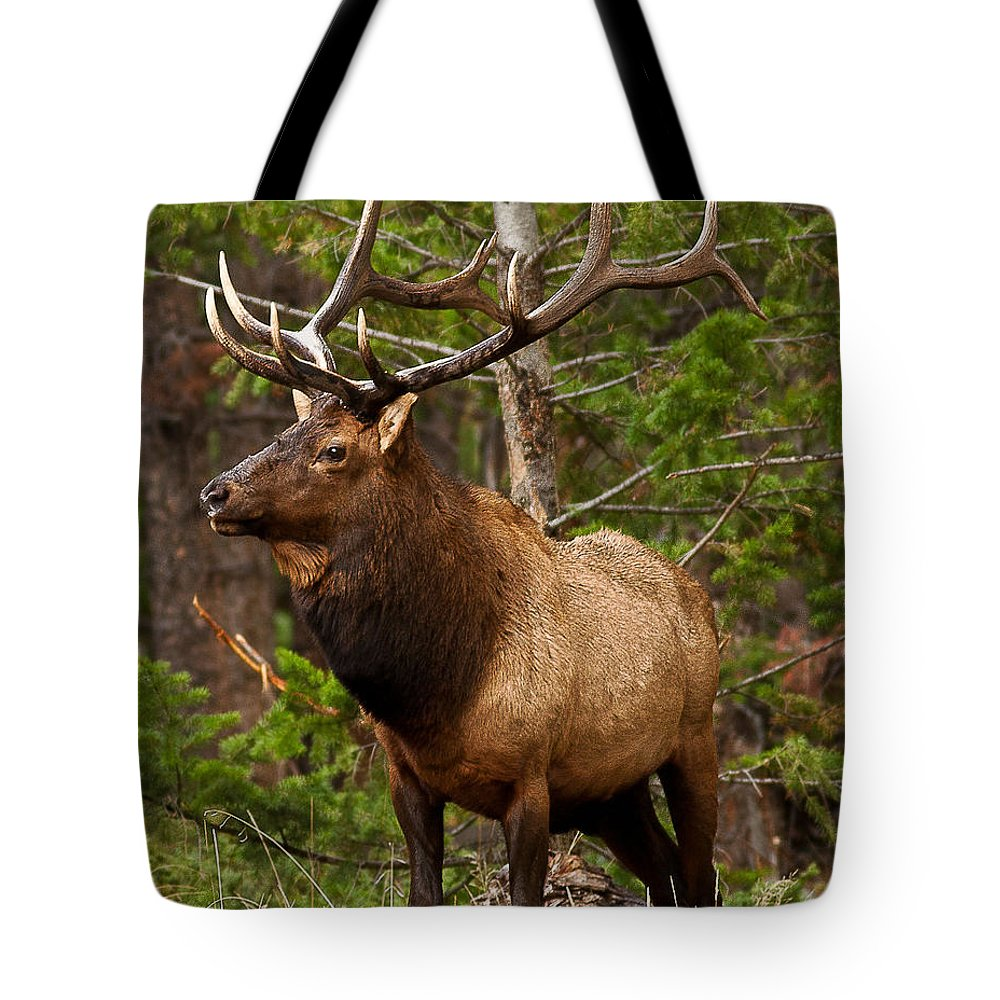 Landscape Tote Bag featuring the photograph The Bull Elk by Steven Reed