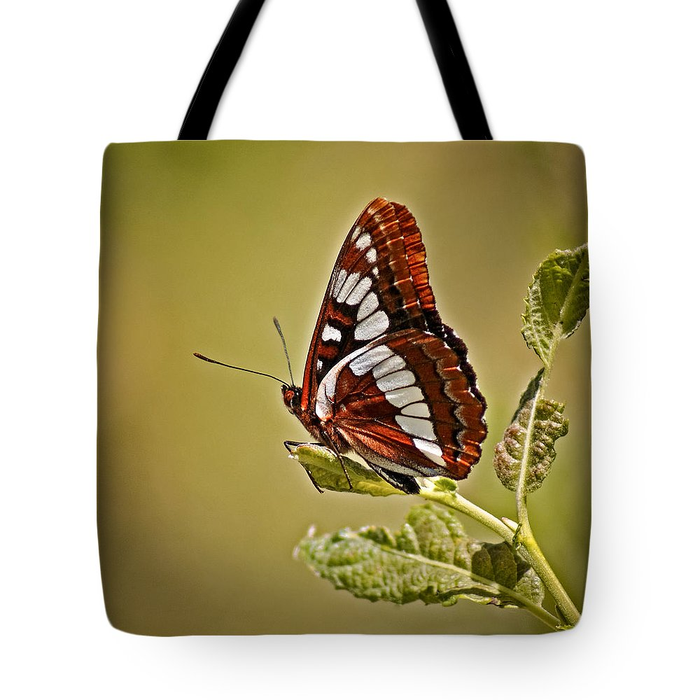Bugs Tote Bag featuring the photograph The Butterfly by Ernie Echols