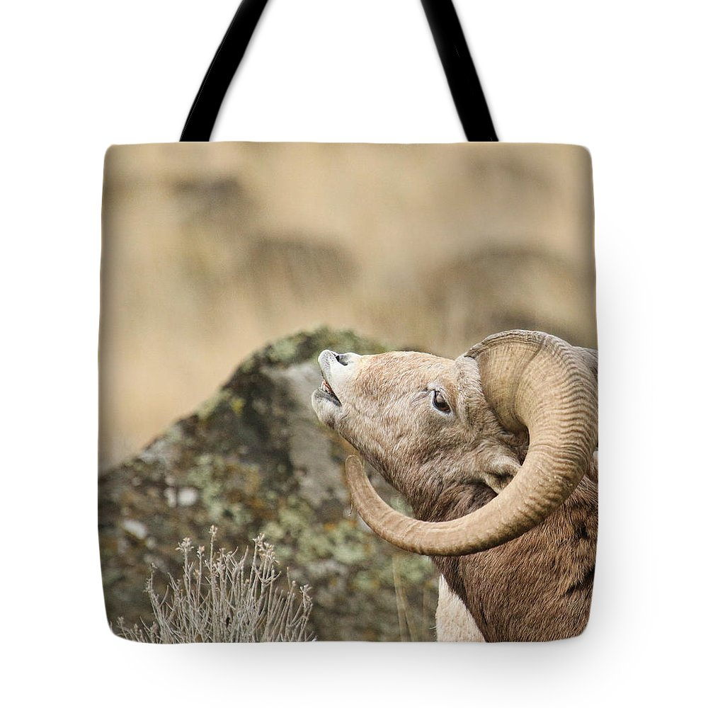 Bighorn Sheep Tote Bag featuring the photograph The Call by Steve McKinzie